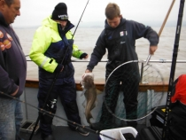 Skipper Micheal gets Richards cod out of net