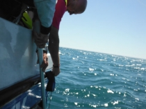 No fish just Skipper Paul Whittall assisting Andy Selby untangle his Bungee Spongee from exhaust flap!